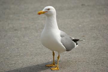 Istanbul bird