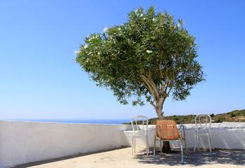 Olivenbaum in Griechenland