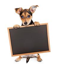 Wall Mural - Cute Chihuahua Crossbreed Holding Chalkboard