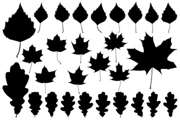 Set of leaves for your design