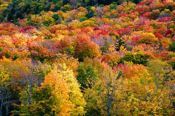 Field of colorful tree fall foliage landscape.