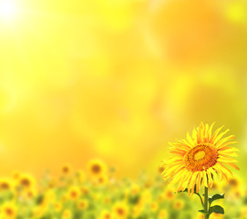 Fototapete - Bright sunflowers on yellow background