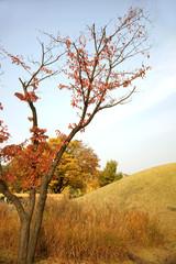 도시의 가을과 단풍