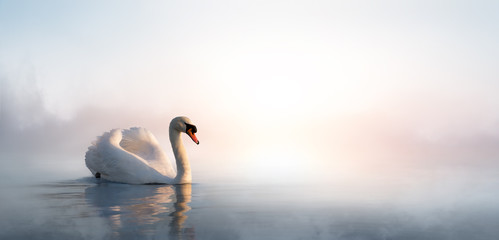 Poster de jardin Blanc Art beautiful landscape with a swan floating on the lake