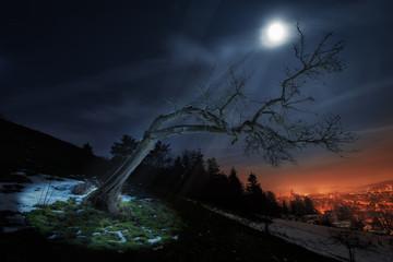 The Full Moon Tree