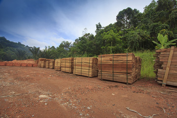 Timber stacked in Borneo, Malaysia. Deforestation environmental damage