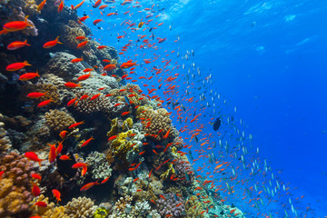 Photo Blinds Coral reefs Underwater coral reef