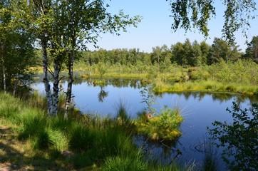 Spiegelung am See - Naturlandschaft Moorlandschaft