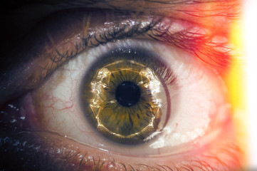 Macro Eyeball Skeleton