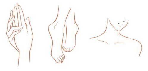手、足、デコルテ