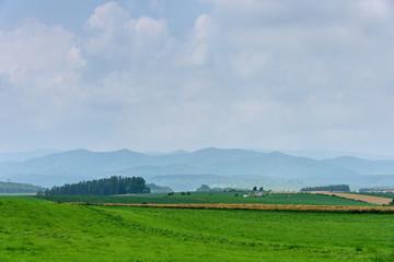 potato field in rural