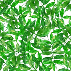 Seamless watercolor green leaves pattern with white background