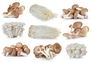 Shiitake mushroom , Enoki mushroom, White beech mushrooms, oyste