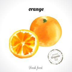 Watercolor orange. Citrus. Recent watercolor paintings of organic food. Fresh exotic fruit.