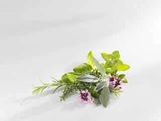 Bunch of herbs: thyme, rosemary, basil, oregano, sage
