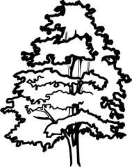 Pine silhouette vector