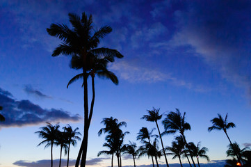 Palm trees on the beach at sunset, Maui, Hawaii, USA