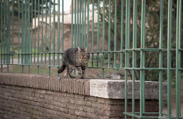 コロッセオ近くの古代ローマ将軍のような猫