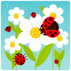Ladybugs flying on white flowers in springtime