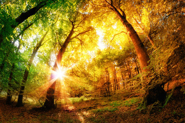 Fototapete - Magic Forest