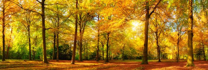 Herbst Wald Panorama im goldenen Sonnenschein Wall mural