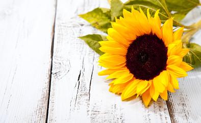 Sunflower on blue white wooden background