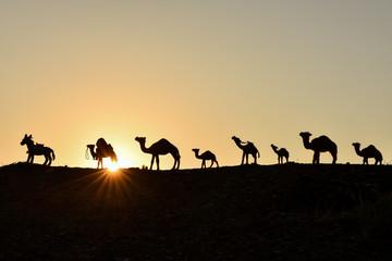 deve katarı & deve geçidi