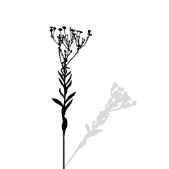 Silhouette of Plants. Vector Ilustration.