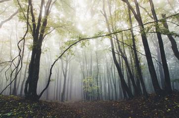 autumn light in misty forest
