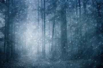 Papiers peints Forets Dreamy snowfall in dark blue colored foggy forest. Beautiful winter snowy forest landscape. Heavy snowfall in magic foggy forest.