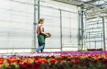 Woman in nursery carrying tray with flowers