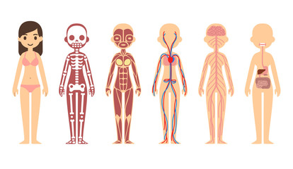 Female body anatomy chart
