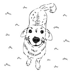 funny dog, smiling,vector sketch