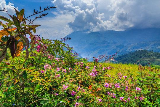 Flowers vietnam