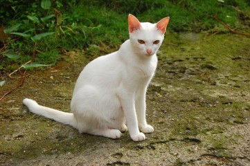 White cat sitting on a pavement photo image