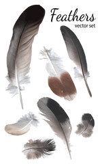 Feathers Collection, High Quality Vector