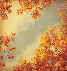 old paper. retro image of Autumn leaves on the sky background. Toned image