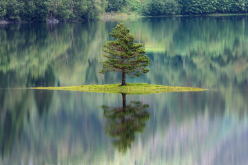 Sapin se reflétant dans un lac en Norvège