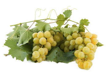 white table grapes