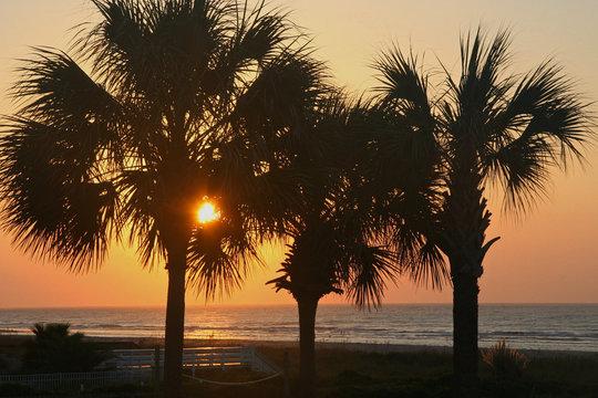 Sunrise Through Palm Trees