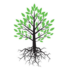 Bolor Tree and Roots. Vector Illustration.