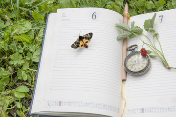 book, strawberries, clock  and butterfly lying on a  green forest lawn under the hot rays