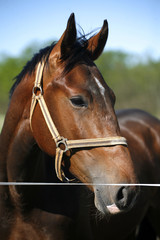 Head shot of a young stallion in the corral