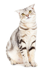 Cat looking something and isolated on white background