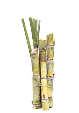 Stump of Sugar cane isolated