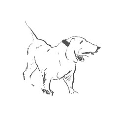 Hang line drawing standing dog breed Basset hound