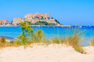Wall Mural - Green grass on sand dune on beach with blurred old town of Calvi in background, Corsica island, France