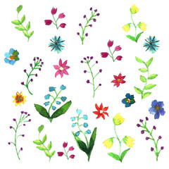 Hand drawn water color set of meadow flowers.
