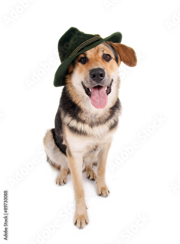 Hund Mit Hut Stock Photo And Royalty Free Images On Fotolia Com