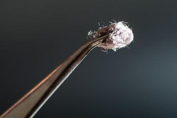 sample of cotton fibers on top of tweezers